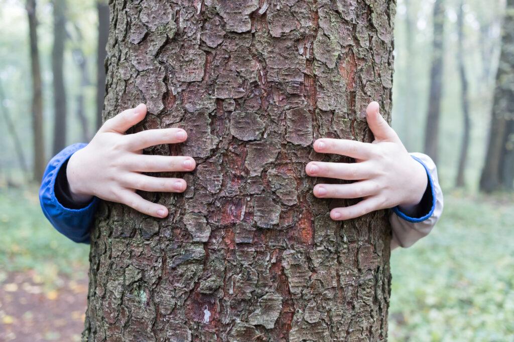 enfant qui embrasse un arbre